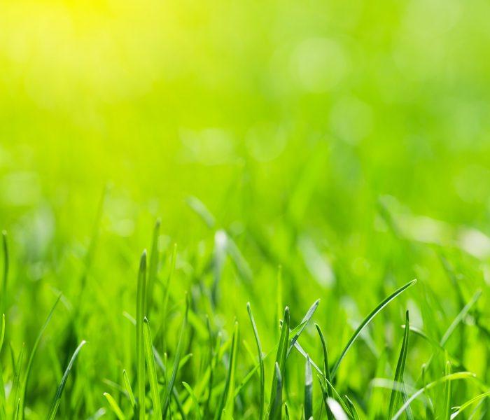 green-grass-background-LZDUX9A
